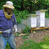 Brad Davis/The Register-Herald<br /> Longtime beekeeper Russell Compton sprays some smoke to repel some agitated honeybees after checking out his colonies at his Mossy home Thursday afternoon. He's been stung many times over the years, saying that he's now immune to them as a result. The bees, he says, will make a distinct sound when they're angry, but he also says it doesn't happen very often because his bees aren't too aggressive.