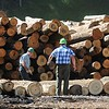 Rick Barbero/The Register-Herald<br /> Workers for Allegheny Wood Products inspecting a load of logs at the Smoot plant Monday morning.
