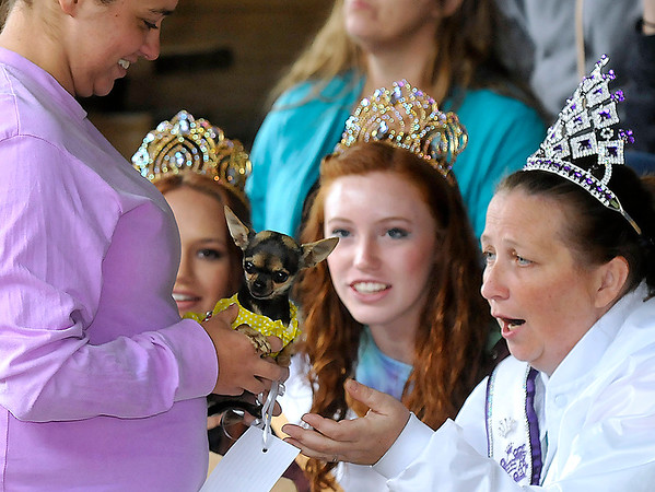 Brad Davis/The Register-Herald<br /> Serving as judges, Mrs. Kids Classic Tamara Meadows (right), Jr. Miss Raleigh County Alexis Bolen, middle, and Miss Raleigh County Shyanne Boothe (background left) can barely stand the level of cute brought before them by Bolt resident Rachael Ward (left), who shows them Mini, a 2-year-old chihuahua during the Kids Classic Pet Pageant Sunday afternoon at the Youth Museum.