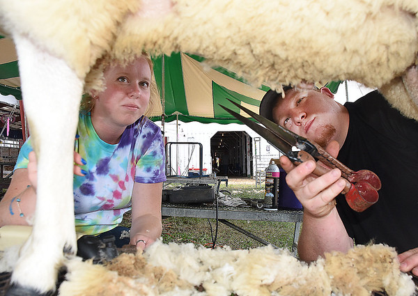 Annaliese Henderson, of Little Town, left, and Ethan Brook, of Lewisburg, are preparing a ram for the National North County Show at the West Virginia State Fair in Fairlea.<br /> (Rick Barbero/The Register-Herald)