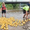 (Brad Davis/The Register-Herald) Official ducky wranglers Sally Fox, left, David Staley, nearest right, and Carol Jackson, back right, corral the racing flock back to dry land at the conclusion this year's Great Rubber Ducky Race in Hinton Sunday afternoon next to Veterans Memorial Bridge in Hinton.