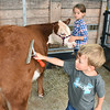 Tucker Sibold, 5, left, and his sister Natalee Sibold, children of, Michael and Nancy Sibold, of Union, brush their Hereford heifer at the West Virginia State Fair in Fairlea.<br /> (Rick Barbero/The Register-Herald)