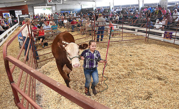 Sara Vance, 10, of Cabins, walks with her market steer during the live stock auction held at the West Virginia State Fair in Fairlea. Her 1101 pound steer was auctioned off for $2.10 a pound and purchased by Jim Justice, of Lewisburg.<br /> (Rick Barbero/The Register-Herald)