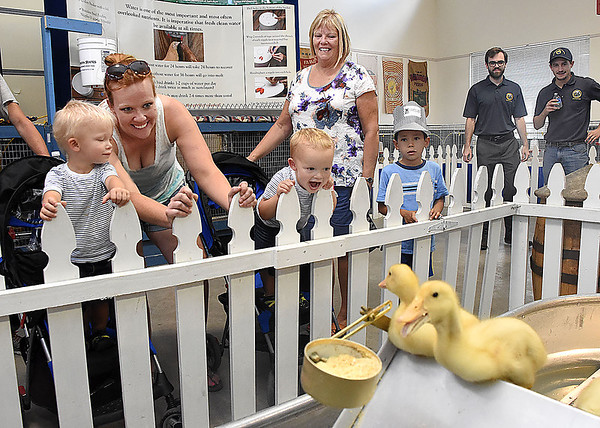 Brantley Brellahan, 2, left, Adrienne Brellahan, Brayden Brellahan, 2, Cindy Jorden and Marlon Watt, 7, check out the ducks in the Poultry building at the West Virginia State Fair in Fairlea.<br /> (Rick Barbero/The Register-Herald)