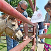 (Brad Davis/The Register-Herald) Owner Time Martin introduces six-year-old Fallyn Collins to Smokey the pony, one of several animals on hand from his Old Mill Farm in Beckley during the Kids Classic Festival Saturday.