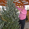 (Brad Davis/The Register-Herald) Oak Hill resident Jeannie Rizer inspects a fresh cut Christmas tree grown by Crickmer Farms in Danese during holiday market hours Friday afternoon at the Rick Rutledge Pavilion. The pavilion is the site of a special Christmas market open for the holiday season with several area vendors selling locally crafted, grown and produced seasonal items every Friday, Saturday and Sunday from 1:00 p.m. to 6:00 p.m.