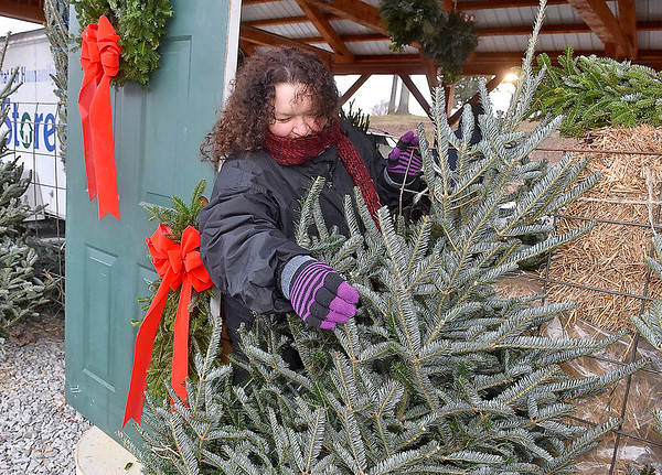 (Brad Davis/The Register-Herald) Christina Jeffries, President of the Fayette County Farmer's Market, helps to fluff out fresh cut, live Christmas trees after putting them out for display Friday afternoon at the Rick Rutledge Pavilion on Virginia Street. The pavilion is the site of a special Christmas market open for the holiday season with several area vendors selling locally crafted, grown and produced seasonal items every Friday, Saturday and Sunday from 1:00 p.m. to 6:00 p.m.