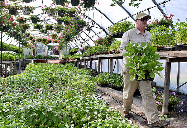 (Brad Davis/The Register-Herald) Rick Morris looks over some of the many types of vegetables and other plants at Morris' Greenhouse Wednesday evening in Oak Hill.
