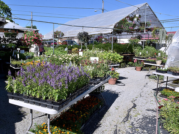 (Brad Davis/The Register-Herald) Morris' Greenhouse is a seemingly large business crammed inside what amounts to a small neighborhood block.