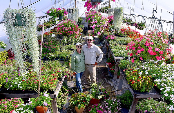 (Brad Davis/The Register-Herald) Owners Sue and Rick Morris pose for a quick photo amidst a sea of colorful flowers and vegetation at Morris' Greenhouse Wednesday evening at their 219 Beech Avenue location.