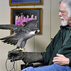 (Brad Davis/The Register-Herald) Three Rivers Avian Center education director Ron Perrone holds Perry, a Peregrine Falcon, during a Spring Migration Celebration Saturday morning at Little Beaver State Park. TRAC brought veteran travelers Regis and Hoolie along with a couple of other raptors along to the annual event, which also featured educational games and activities designed to teach kids the importance of all of nature's creatures.