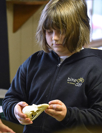 (Brad Davis/The Register-Herald) Eight-year-old Rainelle resident Lena Adkins gets a closer look at a raptor skull, one of several different species on display during Three Rivers Avian Center's annual Spring Migration Celebration Saturday morning at Little Beaver State Park.