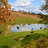 Farm Scene off of State Route 3 in Monroe County near Gap Mills.