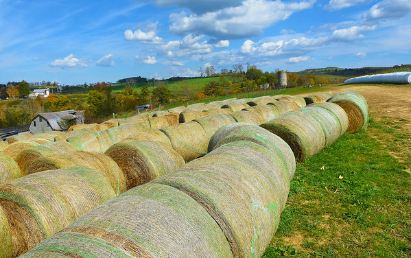 Byrnside Branch Farm located on Willowbend Road in Union is a family owned farm that produces hay and sells hay. Also produces pumpkins, gourd, winter squash. provides a corn maze that is cut out by the owner for peoples enjoyment. All of the corn that is cut out of the maze will be used in some way.