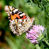 Stalking insects and Butterflies