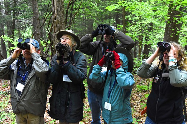 David Trexler, of Lanham, MD, left, Marcia and David Irwin, of Niles, Mich., Francisca Trexler, of Lanham, MD, and Mollee Brown, guide from Fairmont, look for birds during a guided birding tour on the Burnwood Trail in Fayetteville.<br /> (Rick Barbero/The Register-Herald)