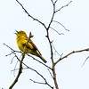 A Guided birding tour looks at a Pine Warbler during the New River Birding and Nature Festival at the Burnwood Campground in the New River gorge National River.<br /> (Rick Barbero/The Register-Herald)