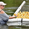 (Brad Davis/The Register-Herald) Race official Katrina Hurst pulls the first place finisher from the water and reads the number aloud as this year's installment of the Great Hinton Rubber Ducky Race reaches its thrilling conclusion Sunday afternoon underneath the Veterans Bridge.