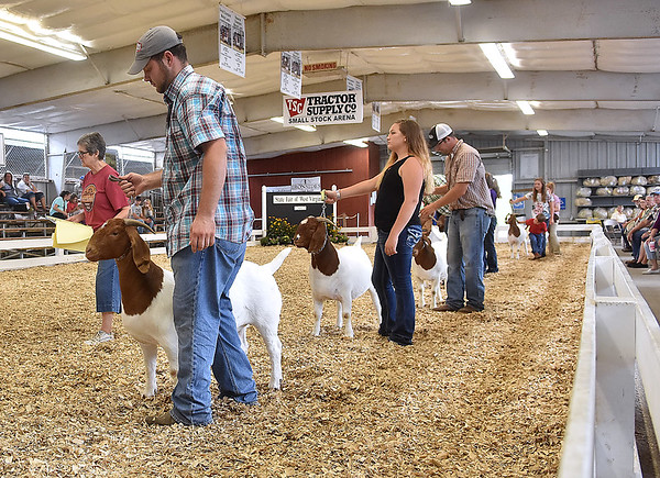 (Brad Davis/The Register-Herald) Boer goats on show at the State Fair Aug. 18 in Fairlea.