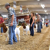 (Brad Davis/The Register-Herald) Boer goats on show at the State Fair Aug. 18 in Fairlea.