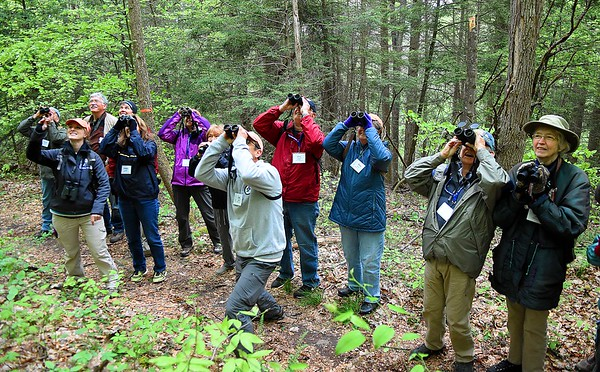 A Guided birding tour on the Burnwood Trail looks for Pine Warblers during the New River Birding and Nature Festival.<br /> (Rick Barbero/The Register-herald)