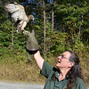 (Brad Davis/The Register-Herald) A rehabilitated red shouldered hawk spreads its wings prior to taking off into woods as Three Rivers Avian Center Executive Director Wendy Perrone releases it back into the wild Wednesday afternoon, one of around 200-250 patients the center will see each year.