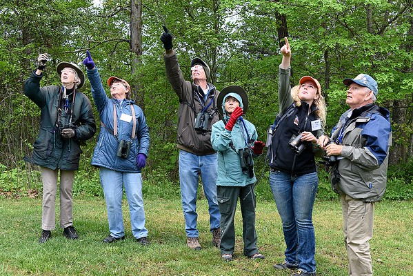 Mollee Brown, guide from Fairmont, second from right, points to a pine warbler during  Guided birding tour on the Burnwood Trail during the New River Birding and Nature Festival.<br /> (Rick Barbero/The Register-Herald)