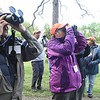 A Guided birding tour on the Burnwood Trail looks for Pine Warblers during the New River Birding and Nature Festival.