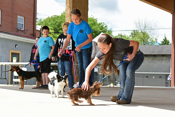 """Chezney Skaggs, 13, competes with her dog, """"Charlie Brown"""", during the best puppy category as part of the 4H-Fayette Pet Show at the Lively Amphitheater Saturday in Oak Hill. (Chris Jackson/The Register-Herald)"""