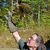 (Brad Davis/The Register-Herald) A rehabilitated red shouldered hawk spreads its wings and takes off as Three Rivers Avian Center Executive Director Wendy Perrone releases it back into the wild Wednesday afternoon, one of around 200-250 patients the center will see each year.