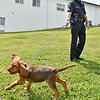 "(Brad Davis/The Register-Herald) Sgt. Randy White handles 9-week-old bloodhound Trigger, one of three new K-9 members to join the force at the Raleigh County Sheriff's Office, during a ""meet and greet"" with local media Thursday afternoon. Young Trigger is still in training and will be ready for active service at about 5 or 6 months old."