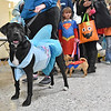 (Brad Davis/The Register-Herald) Marley, owned by Beckley resident Katrina Martin (holding leash out of the frame), waits in line during the cotume contest portion of the Humane Society of Raleigh County's Howloween event Saturday afternoon inside the Beckley Plaza Mall.