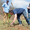 (Brad Davis/The Register-Herald) Rotarian Sandra Herrold packs the soil around a freshly planted hybrid chesnut tree as she joins with around 60 fellow Rotarians from 10 different chapters around the state in planting 1,400 oak, various pine and hybrid chesnut trees Saturday morning at the Bechtel Summit Reserve. The Summit's Todd McGregor looks on in the background.