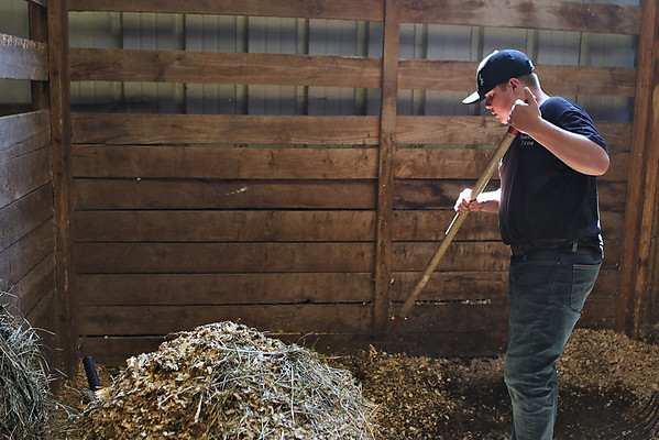 Luke Carola, 12, cleans out the stall where his families' draft horse Lexi is kept at the State Fair of West Virginia Tuesday. (Jenny Harnish/The Register-Herald)