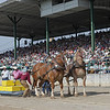 Draft horses are lined up near the grandstand during the Draft Horse Pull at the West Virginia State Fair Friday. (Jenny Harnish/The Register-Herald)
