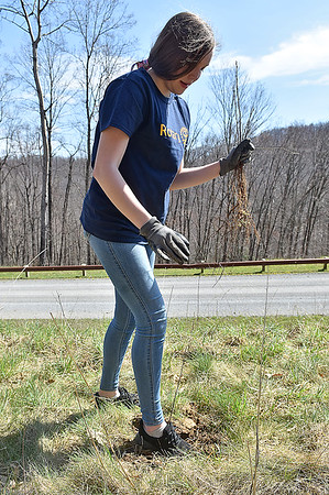 (Brad Davis/The Register-Herald) Volunteer Elizabeth Heemstera uses her foot to press down the soil around a sapling as she joins with around 60 fellow Rotarians from 10 different chapters around the state in planting 1,400 oak, various pine and hybrid chesnut trees Saturday morning at the Bechtel Summit Reserve.