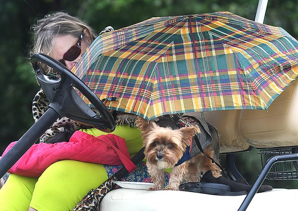 Delilah Bromfield, of Saulsville and her dog Zoe, of Saulsville, watches her grandson, Ethan Bradford, of Wyoming East, play in the Class AA Region 3 golf tournament held at Grandview Country Club in Beaver Monday afternoon.<br /> (Rick Barbero/The Register-Herald)