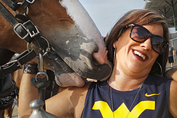 Kelly Wills, of Lewisburg, enjoys a moment with a draft horse at the West Virginia State Fair Friday. (Jenny Harnish/The Register-Herald)