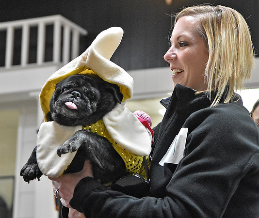 (Brad Davis/The Register-Herald) A pug dressed up as an ice cream sundae during the Humane Society of Raleigh County's Howloween event Saturday afternoon inside the Beckley Plaza Mall.