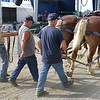 Competitors walk their horses to compete in the Draft Horse Pull at the West Virginia State Fair Friday. (Jenny Harnish/The Register-Herald)