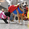 (Brad Davis/The Register-Herald) Costumed pets Apple, left, and Vinnie (Superman) join their costumed human campanions during the Humane Society of Raleigh County's Howloween event Saturday afternoon inside the Beckley Plaza Mall.