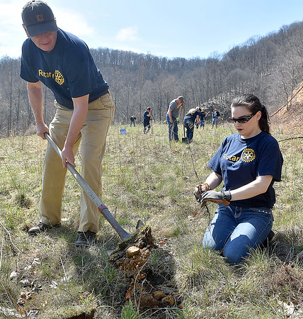 (Brad Davis/The Register-Herald) Mike Smith digs another hole as Kim Feazell is ready with another tree as the Canyon Rim Rotary Club members join with around 60 fellow Rotarians from 10 different chapters around the state in planting 1,400 oak, various pine and hybrid chesnut trees Saturday morning at the Bechtel Summit Reserve.