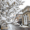Snow covers buds on tree limbs on Main Steet in Beckley Monday morning.<br /> (Rick Barbero/The Register-Herald)