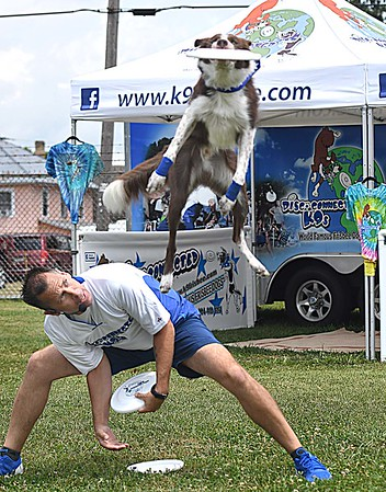 Scot Koster, watches his dog Blitz catch a frisbee during his Disc-Connected K-9S show at the State Fair in Fairlea Friday afternoon.<br /> (Rick Barbero/The Register-Herald)