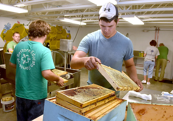 (Brad Davis/The Register-Herald) Beekeepers Sean Phelps, right, and Robbie Gardisky, back turned left, move combs packed with honey from the hive box to a machine called an uncapper, which breaks up the wax seal that encases the honey before they're placed in an extractor, during an open house and demo event at Shady Spring High School's new honey extraction facility August 3.