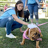 (Brad Davis/The Register-Herald) Teen Miss Beckley Kids Classic Ninamae Coberly meets and greets with Coco, a 6-month-old English Bulldog as she makes the rounds as a judge in the Dazzling Dog Show Sunday afternoon at the Youth Museum.