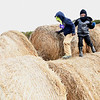 Cooper Smith, left and Luke Bostic preschoolers at Crescent Elementary, walking on bales of hay at the Okes Family Farm in Cool Ridge.<br /> (Rick Barbero/The Register-Herald)