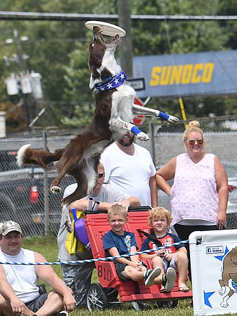 Blitz catch a frisbee during his Disc-Connected K-9S show at the State Fair in Fairlea Friday afternoon.<br /> (Rick Barbero/The Register-Herald)