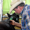 (Brad Davis/The Register-Herald) Brian Bail, of Bail Farm out of Birch River, makes sure his cow looks its best as he prepares it for show with a haircut Sunday afternoon at the State Fair in Fairlea.