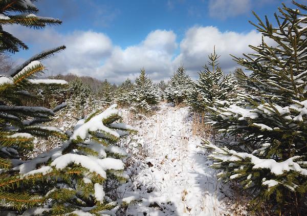 Bluestone Nursery, a cut-your-own Christmas tree farm in Camp Creek. (Jenny Harnish/The Register-Herald)